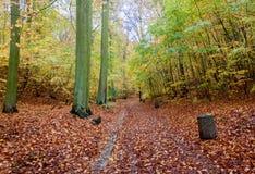 Trajeto bonito do outono na floresta com folhas e as árvores coloridas fotos de stock royalty free