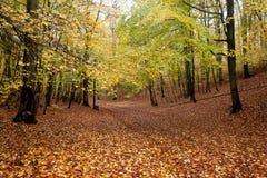 Trajeto bonito do outono na floresta com folhas e as árvores coloridas imagem de stock