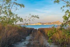 Trajeto cercado pela vegetação que conduz ao lago imagem de stock