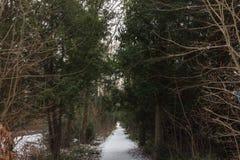 Trajeto coberto de neve da estrada nas madeiras fotografia de stock royalty free
