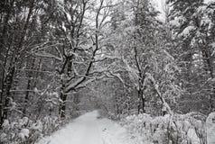 Trajeto coberto de neve na floresta Imagens de Stock