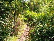 Trajeto coberto de vegetação com provocações Foto de Stock