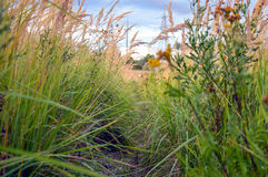 Trajeto coberto de vegetação na grama alta Fotografia de Stock