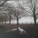 Trajeto com árvores Fotografia de Stock Royalty Free