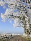 Trajeto com árvores brancas Fotografia de Stock