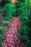 Trajeto com as folhas de outono coloridas através da floresta Fotografia de Stock Royalty Free