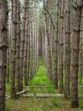 Trajeto com a fileira de árvores magros Fotos de Stock