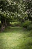 Trajeto com a profundidade rasa luxúria da paisagem da floresta do campo em inglês imagem de stock royalty free