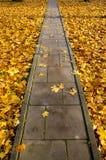 Trajeto concreto do parque através das folhas de outono Fotos de Stock Royalty Free