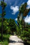Trajeto concreto no meio da selva Foto de Stock Royalty Free