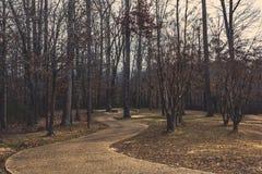 Trajeto Curvy entre as árvores Imagens de Stock