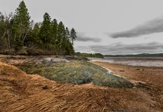 Trajeto da alga Imagens de Stock Royalty Free