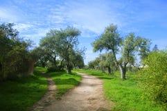 Trajeto da caminhada de Brown no parque verde-oliva foto de stock