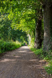 Trajeto da caminhada na fuga da caminhada do parque nos canais de água em Woking, Surrey Imagens de Stock Royalty Free