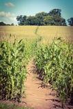 Trajeto da colheita Imagens de Stock Royalty Free