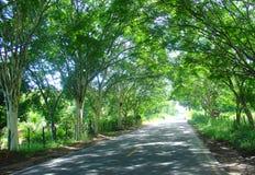 Trajeto da estrada das árvores Imagens de Stock