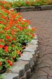 Trajeto da flor Fotografia de Stock