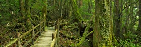 Trajeto da floresta úmida na terra de Yakusugi na ilha de Yakushima, Japão imagem de stock