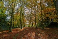 Trajeto da floresta Fotos de Stock Royalty Free