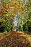 Trajeto da floresta Imagem de Stock Royalty Free