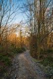 Trajeto da floresta Foto de Stock Royalty Free