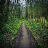 Trajeto da floresta Foto de Stock