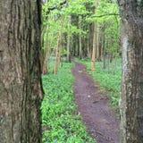 Trajeto da floresta através das árvores densas foto de stock