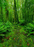 Trajeto da floresta húmida Fotos de Stock