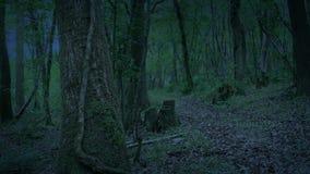 Trajeto da floresta no crepúsculo video estoque