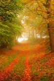 Trajeto da floresta no outono Imagens de Stock