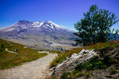 Trajeto da natureza a Mount Saint Helens Fotos de Stock Royalty Free