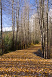 Trajeto da natureza na queda Fotografia de Stock Royalty Free