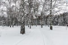 Trajeto da neve através do bosque do vidoeiro imagem de stock royalty free