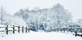 Trajeto da neve do inverno através da floresta imagem de stock royalty free