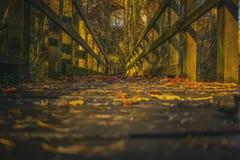 Trajeto da passagem através da floresta na queda da paisagem do outono fotos de stock royalty free