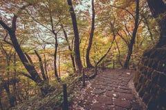 Trajeto da passagem em Nyoho Mt com folha de bordo japonesa Foto de Stock Royalty Free