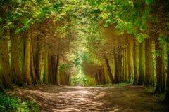 Trajeto da pista da passagem com as árvores verdes na floresta Foto de Stock