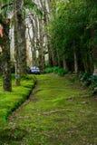 Trajeto da pista da passagem com as ?rvores verdes em Forest Beautiful Alley In Park imagem de stock royalty free