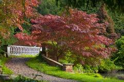 Trajeto da ponte do outono Imagem de Stock