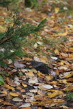 Trajeto da queda em uma floresta Foto de Stock Royalty Free