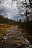Trajeto da região pantanosa Imagem de Stock Royalty Free