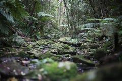 Trajeto da selva imagens de stock royalty free