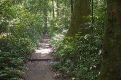 Trajeto da selva Fotos de Stock