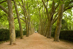 Trajeto das árvores Fotos de Stock Royalty Free