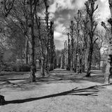 Trajeto das árvores foto de stock royalty free