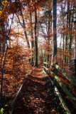 Trajeto das folhas vermelhas e da laranja Fotos de Stock