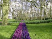 Trajeto das tulipas Imagens de Stock Royalty Free