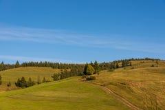 Trajeto de floresta às madeiras de pinho nas montanhas Carpathian Imagem de Stock