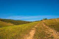 Trajeto de floresta às madeiras de pinho nas montanhas Carpathian Imagens de Stock Royalty Free