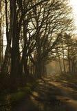 Trajeto de floresta. Foto de Stock Royalty Free